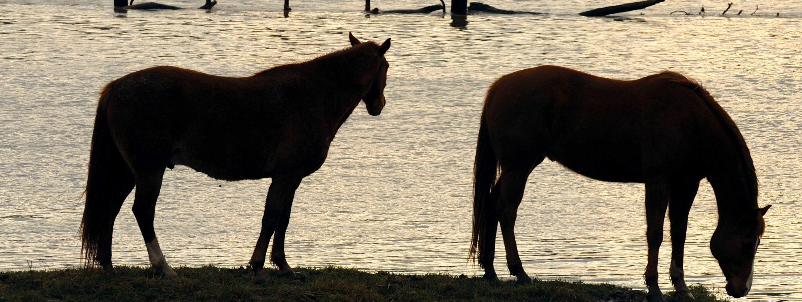Eureka, MO- Two horses investigate the flood waters that have overtaken their normally dry pasture.  Jocelyn Augustino/FEMA