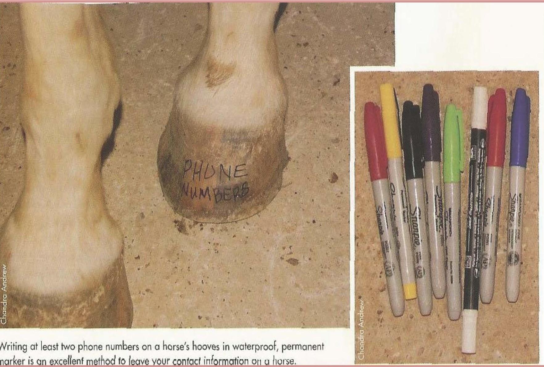 Horse Hoof ID