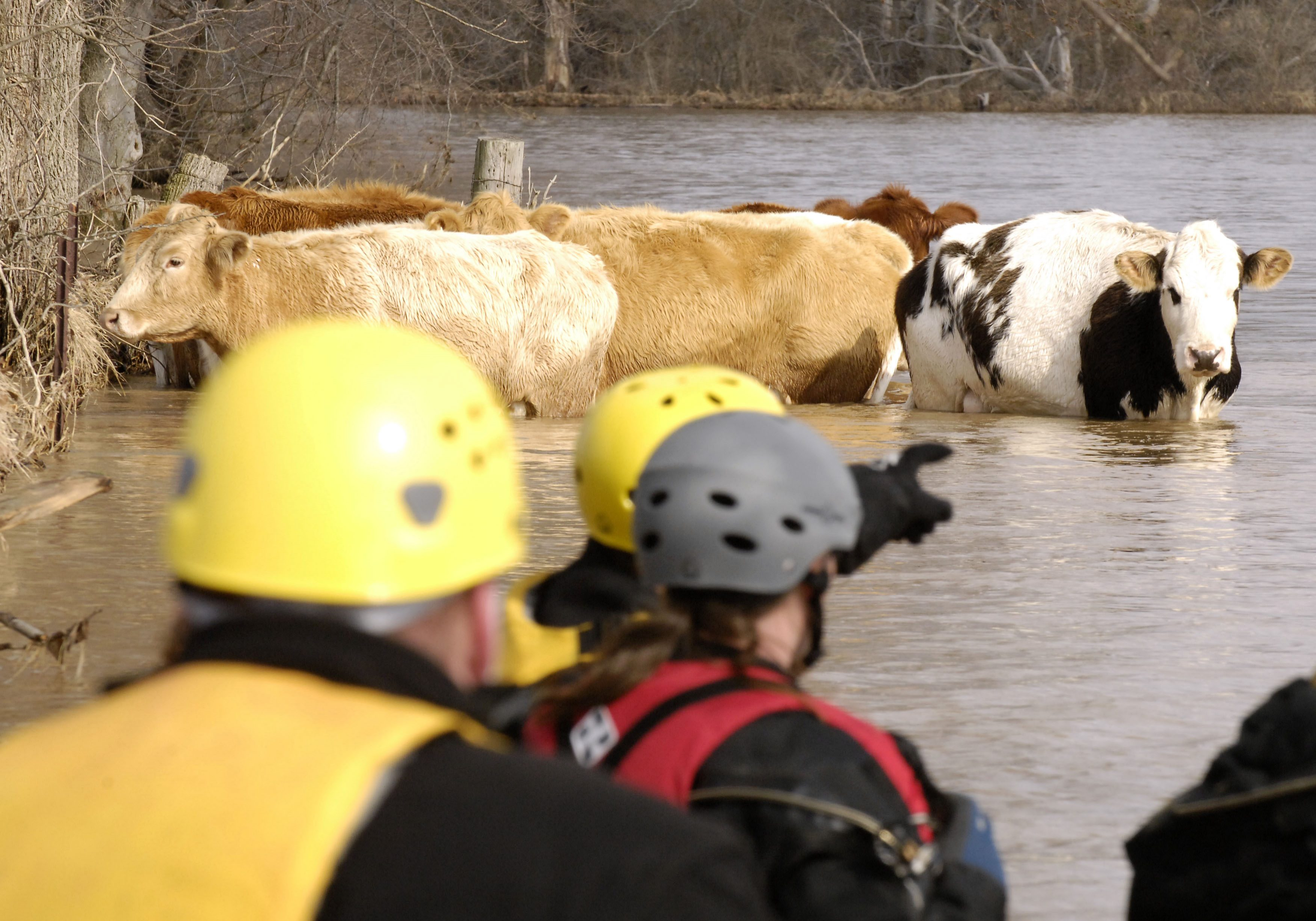 Eureka, MO- Members of the Missouri Emergency Response Service team, a non-profit that does large animal rescues,  launch a boat to take part in a  large animal rescue along with the Humane Society to rescue 13 cattle that were stuck in flood waters.  Jocelyn Augustino/FEMA